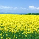 【国内旅行】北海道おすすめ!北の大地と青空で、たまには現実逃避!