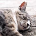 恐怖の金縛り原因は?レム睡眠、ノンレム睡眠と関係あるの?