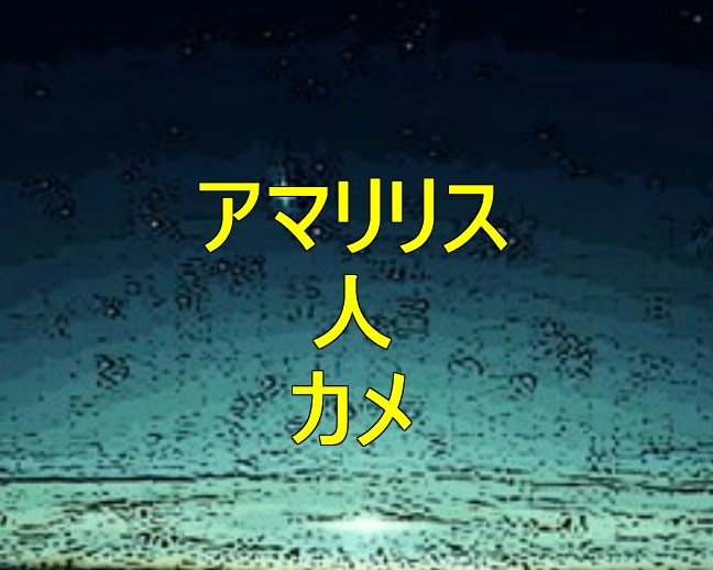 アマリリス人カメ