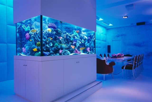 an aquarium check out these 25 rooms with stunning aquariums
