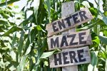 Get Lost in These Amazing Delaware Corn Mazes