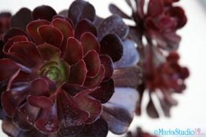 MariaStudio19.com_Nature1