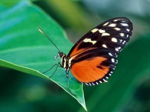 butterflies_-_03-800x600
