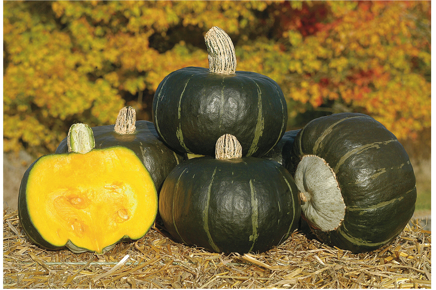 Splendent View Image Bonbon Treated Squash Seed Selected Seeds Burgess Seed Plant Co Promo Code Plant Zones Burgess Seed houzz-03 Burgess Seed And Plant