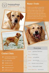 Lost Dog Flyer Template-15