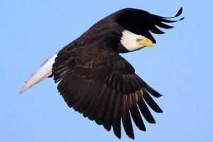 鷹の選択アイキャッチ画像