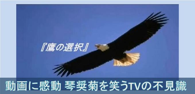 琴奨菊と鷹の選択