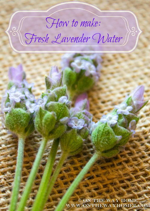 lavender2wateredited 500
