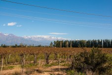 vineyards-on-way-into-mendoza