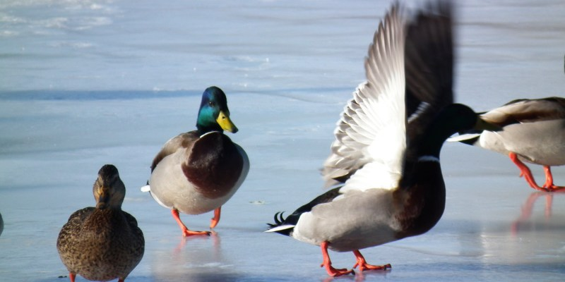Wash Park wildlife. Washington Park in Denver CO.