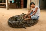 Bereits Seans älterer Bruder drang in den Zoo ein. Damals kam die Schlage allerdings mit einem Schrecken davon.