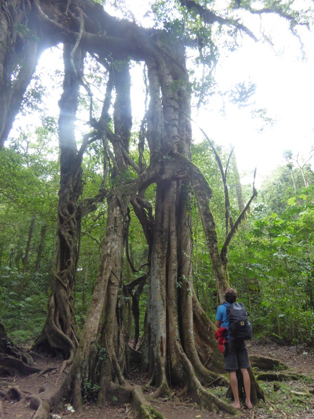 Art of Adventure Stories from Bali magic Tree