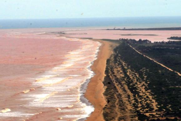 Pesquisa aponta contaminação por metais pesados em peixes no litoral do ES