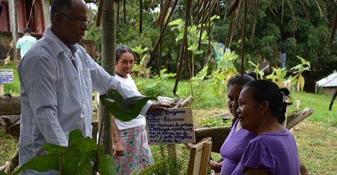 Salazar resgatou uso de plantas medicinais cujos benefícios são comprovados pela ciência. Foto: OPAS