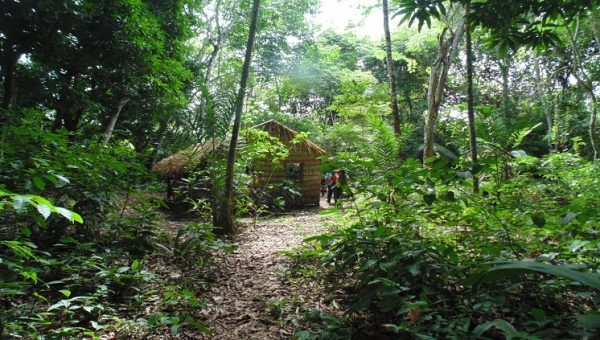 Estudo revela que povos pré-colombianos moldaram a flora da floresta amazônica