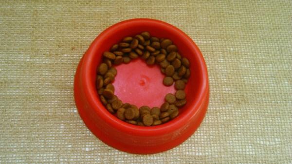 Por que os gatos deixam ração na beirada do pratinho?