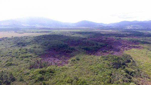 Incêndio criminoso ocorre em Ratones em área onde pretende se construir aeroporto e empreendimentos de luxo