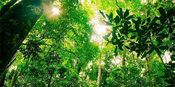 Brasil tem maior diversidade de árvores do planeta, diz estudo inédito