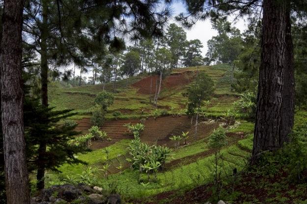 FAO: Cerca de um terço dos solos do mundo está degradado devido a problemas de manejo,