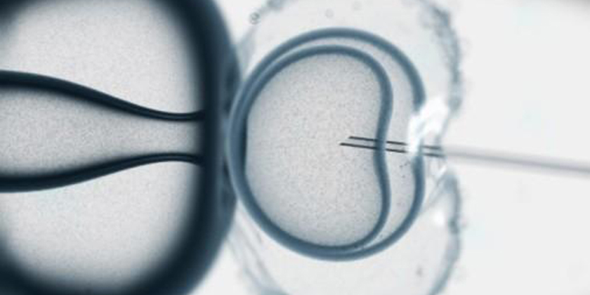 IVF: BPA causes a linear increase in the death rate of embryos