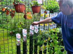 Small Of You Tube Container Gardening