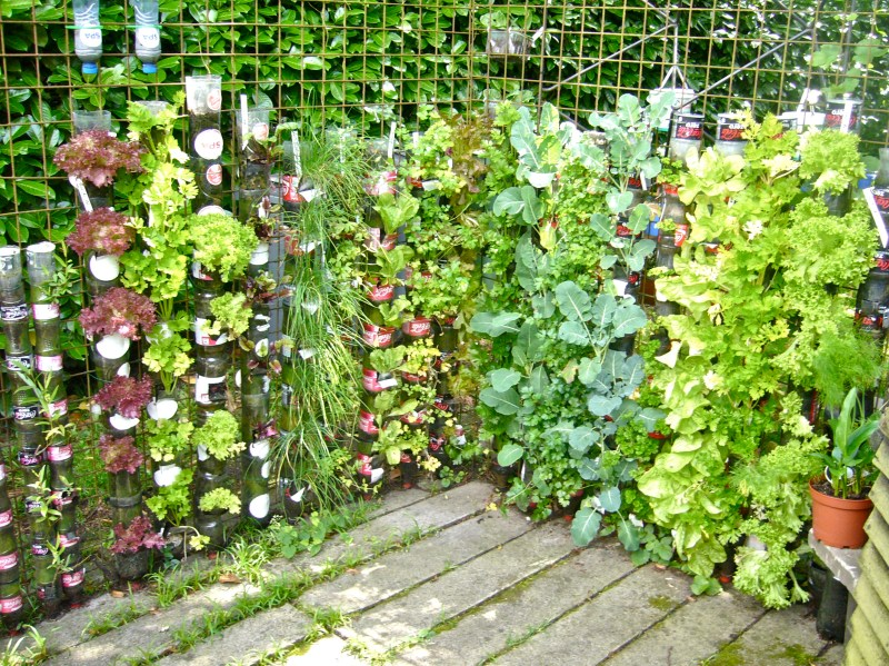 Large Of Best Vegetables For Vertical Gardening