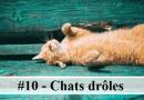 #10 – 10 photos de chats drôles