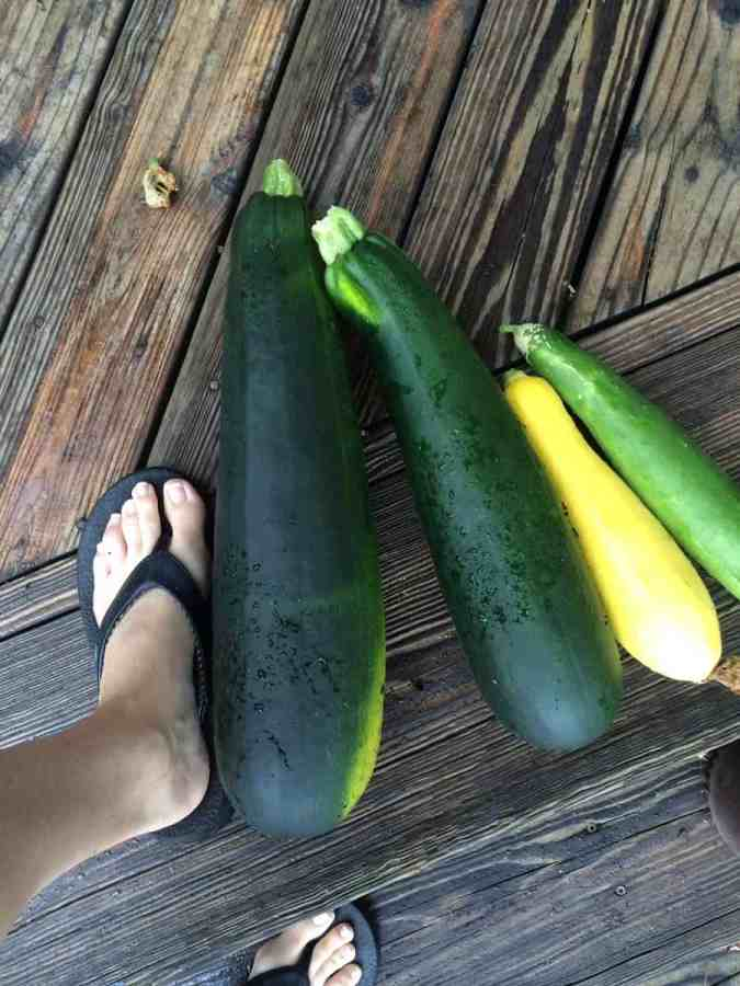 How does your zucchini grow?
