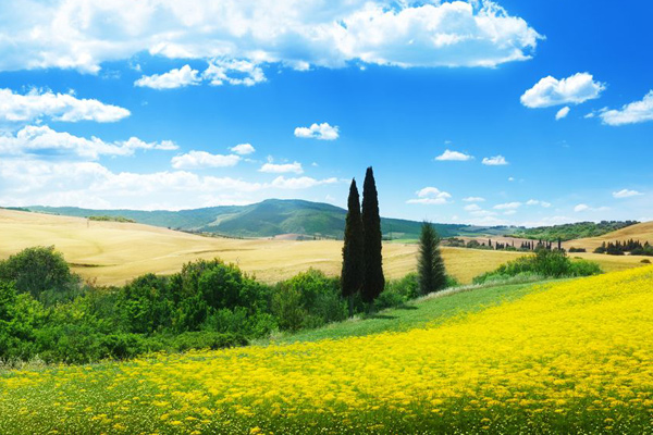 pretty yellow grass flowers tuscany italy