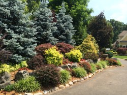 Small Of Evergreen Landscape And Design