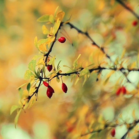 autumn_jewelries_by_pawelmatys-d5hw8vo
