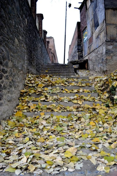 fallen leaves on the steps of an alley in Srinagar kashmir in Autumn