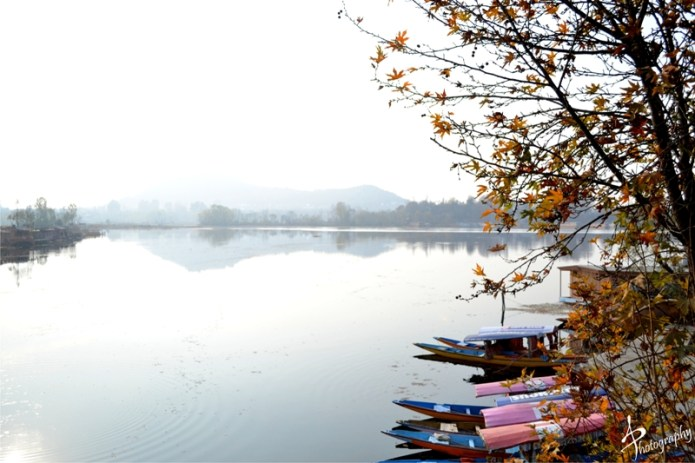 shikara on the bank of  dal lake kashmir