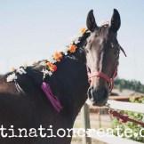 horse 6wm