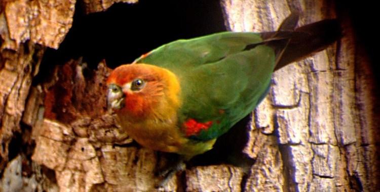 Best Spots for Birdwatching