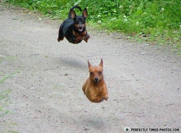 hilarious-dog-moments-2