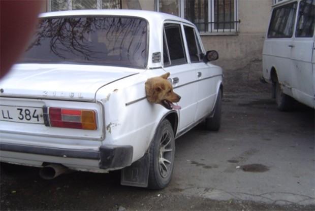 wtf-dog-photos-24