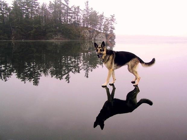 wtf-dog-photos-4