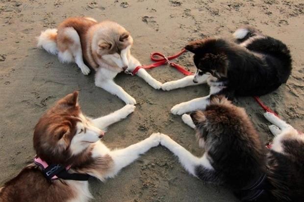 wtf-dog-photos-7