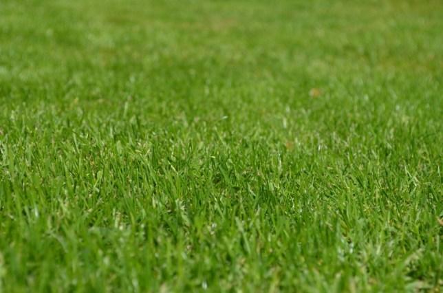 Dopadová plocha - kvalitní travní drn