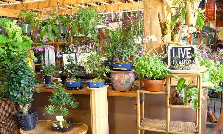 Epic Gardening Indoor Gardening Basics
