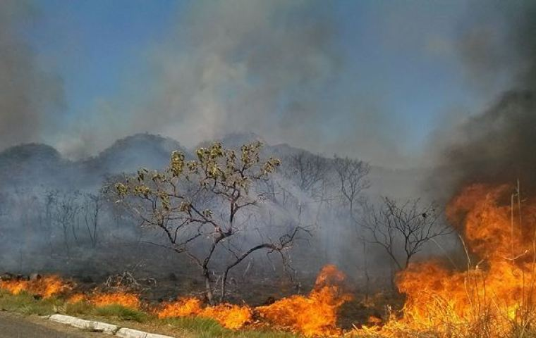 Fires threaten Brazil's forests and emissions reductions plans