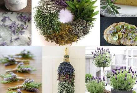 Recetas con flores de romero
