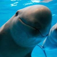 leonardo di caprio quiere proteger a la vaquita marina
