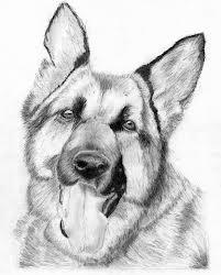 dibujo a lapiz de perro ovejero aleman