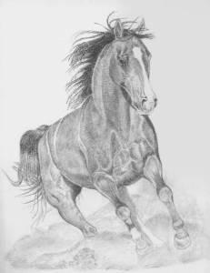 como dibujar a lapiz un caballo (2)