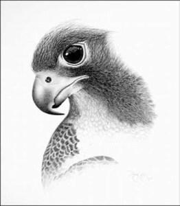 dibujos a lapiz de animales (4)