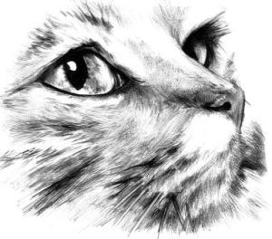dibujos a lapiz de animales (8)