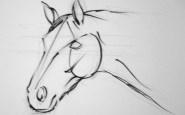 Dibujos a lapiz de caballos (1)