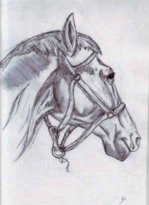 Dibujos a lapiz de caballos (3)